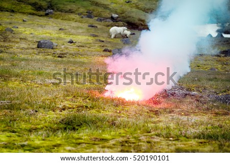 Photographers risk. Polar bear (ice bear, Ursus maritimus) attacked photographer. Female never seen people and protects cub. Rocket fired into ground between predator and man to ward off animals