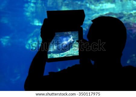 Photographing a manatee aquarium. Silhouette of a man shooting a manatee with a tablet aquarium - stock photo