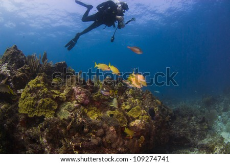 Photographing the fish on the reef - stock photo