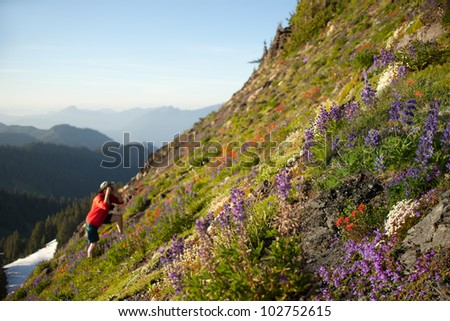 Photographing wild flowers in North Cascades Mountain Range, WA - stock photo