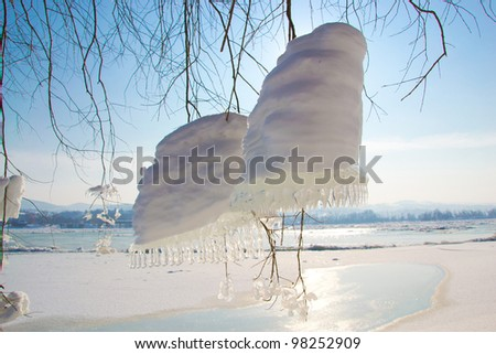 Photography of amazing natural snow and icicle decoration hanging from the tree on the beach - stock photo