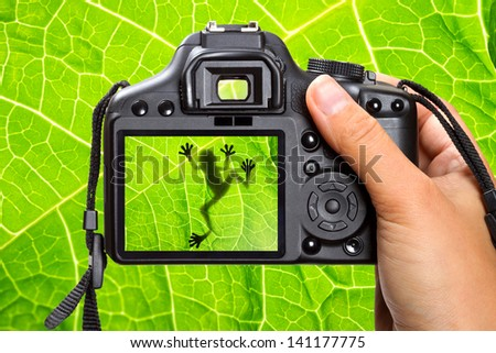 Photography of the tree frog - stock photo