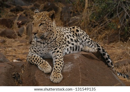 Photos of Africa, Leopard on rock