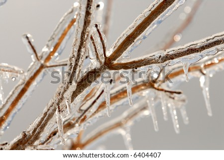 Photos of branches covered in ice after an ice storm. - stock photo