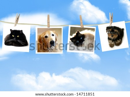 Photos of dogs and cats hanging from a clothes line - stock photo