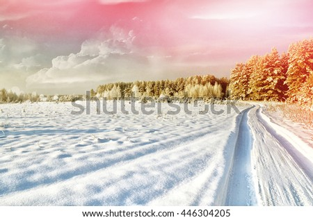 Photos of the winter woods. landscape. Snow covered trees - stock photo