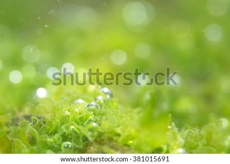 photosynthetic - stock photo