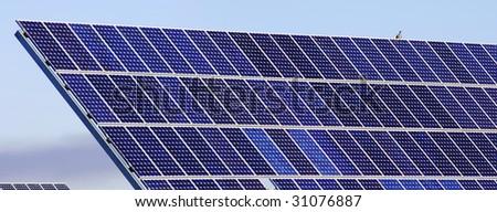 photovoltaic panels and bird - stock photo