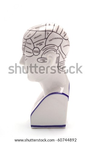 Phrenology Head
