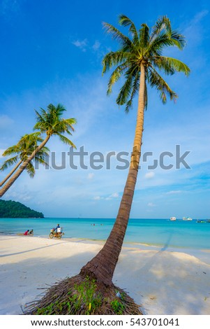 Phu Quoc Island, Vietnam travel - July 24, 2016: Curved beauty coconut tree in Phu Quoc, Kien Giang province, Vietnam