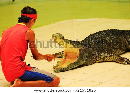 Phuket, Thailand - August 05, 2017. stuntman-the trainer prepares the crocodile to be dangerous to human trick