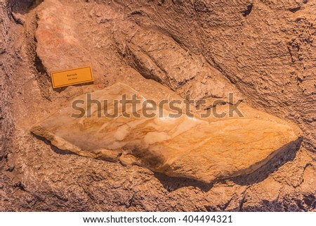 Phuket, Thailand - March 26, 2016: Sample of Silt stone demonstrated at Phuket Mining Museum, Thailand