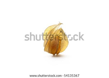 physalis isolated on white - stock photo