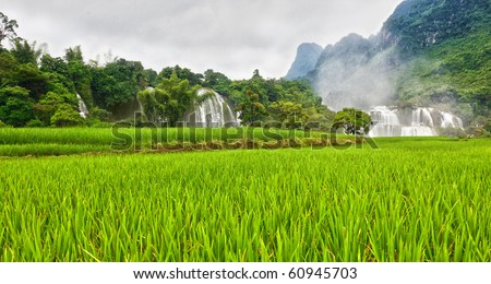 Pice paddy field and waterfall on background