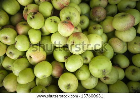 Picked Apples. Green. - stock photo