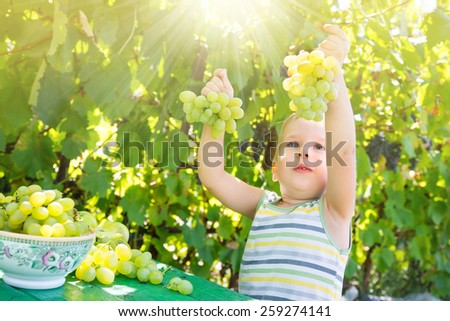 Picking fruit in an orchard.  Green grape, plums, apples, tomatoes on table - stock photo