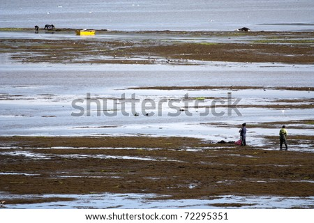 Picking seagrass for a seafood market