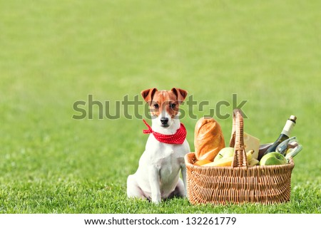 picnic basket on green lawn - stock photo