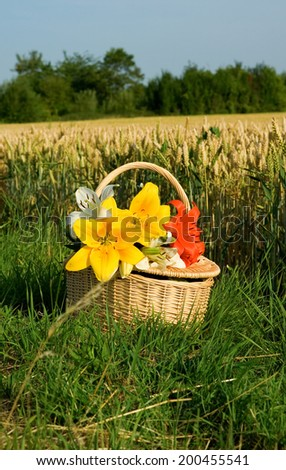 Picnic basket with bunch of flowers near the golden wheat field