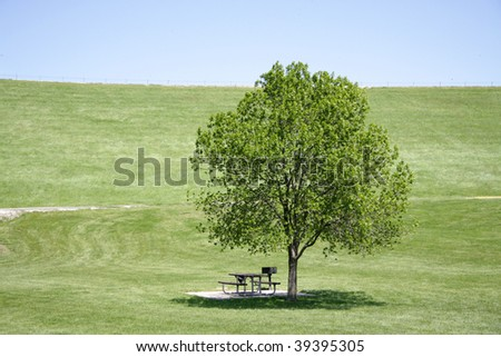 picnic table and grill shaded by tree in the middle of this hilly, grassy field on a hot summer day