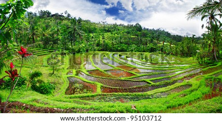 pictorial rice terraces of Bali island - stock photo