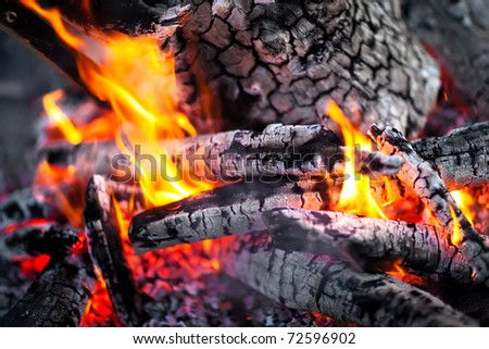 picture burning in the fire tree - stock photo