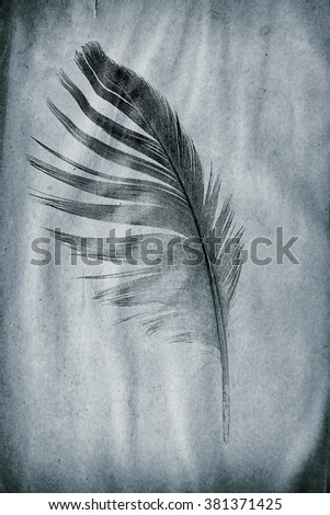 picture feather on the grunge paper - stock photo