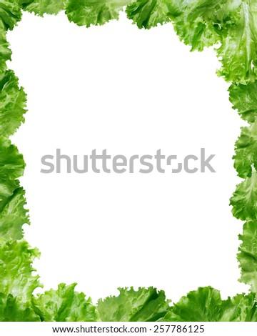 Picture frame made from freshness green lettuce leaves - stock photo
