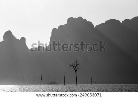 Picture is abstract. It gives a sense of dead or survival. beautiful of nature hidden many meanings. - stock photo