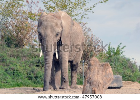 Picture of a big elephant on a sunny summer day