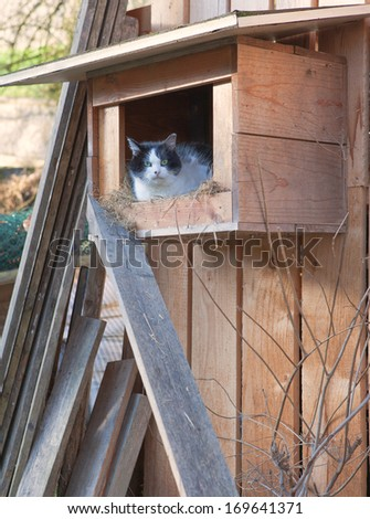 Picture of a cat in a woodhouse for cats. Animal looks straight to the Photographer - stock photo