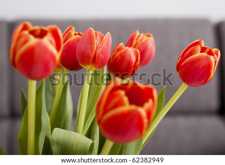 Picture of a colorful and beautiful arrangement of orange tulips - stock photo