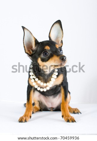 Funny Dog Princess Fairy Wearing Crown Stock Photo - Dogs looking funny with toys