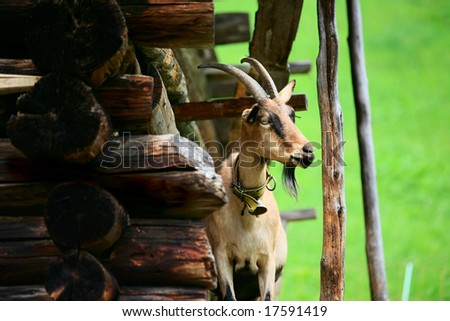 Picture of a Goat taken in Switzerland - stock photo