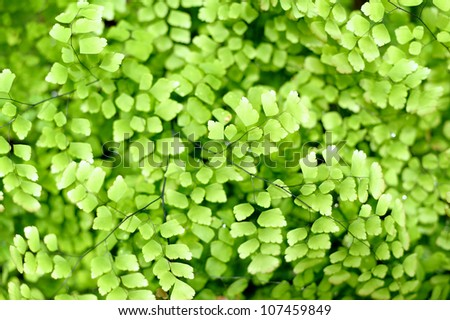 Picture of a green fern. - stock photo