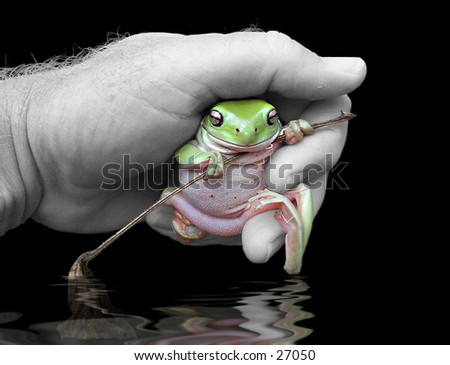 Picture of a green tree frog in a hand over water - stock photo