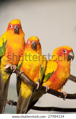 Picture of a parrot with beautiful colors - stock photo