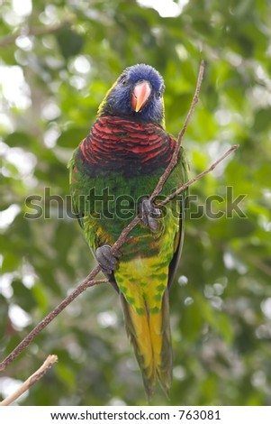 picture of a rainbow lory