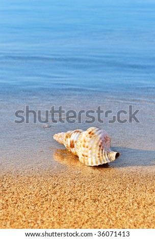 Picture of a seashell on a serene beach, washed by calm blue waters. Room for text.