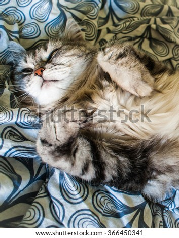 Picture of a sleepy siberian cat lying on the sheets