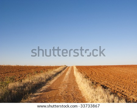 Picture of a summer landscape with great sun and blue sky
