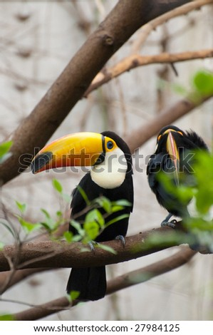 Picture of a toucan with nice colors. - stock photo