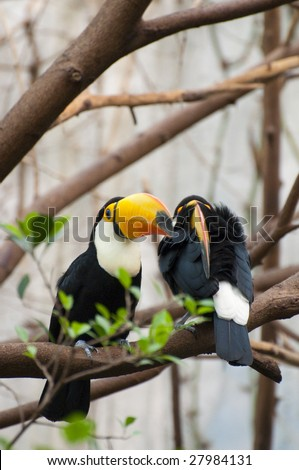 Picture of a tucan with nice colors. - stock photo