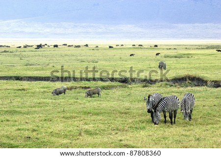 Picture of a typical savanna scene - stock photo