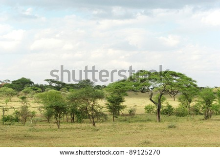 Picture of a typical Serengeti landscape - stock photo