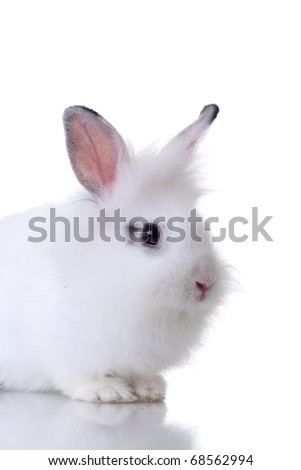 picture of a very cute little white rabbit. Isolated on white background - stock photo