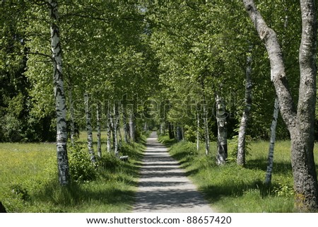 Picture of a wooden path outside in summer - stock photo