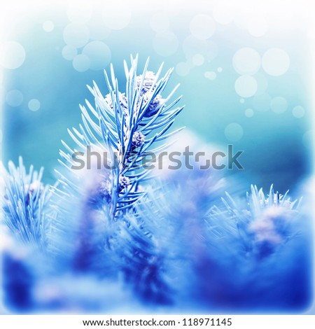 Picture of abstract fir tree background, beautiful coniferous branches covered with blue rime, Christmas greeting card, weather of december, New Year holiday, spruce forest covered by hoar - stock photo