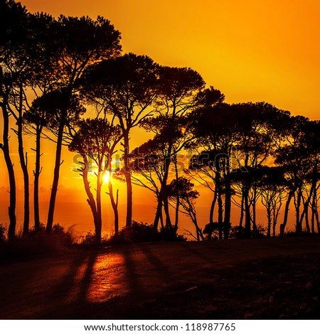Picture of beautiful trees on sunset, forest over orange sundown, silhouette of tree on morning sunrise, warm autumn weather, dramatic dusk, peaceful nature, bright sun shine in the evening in woods - stock photo