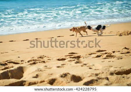 Picture of dogs chasing each other on the ocean sandy beach at sunset outdoors background - stock photo